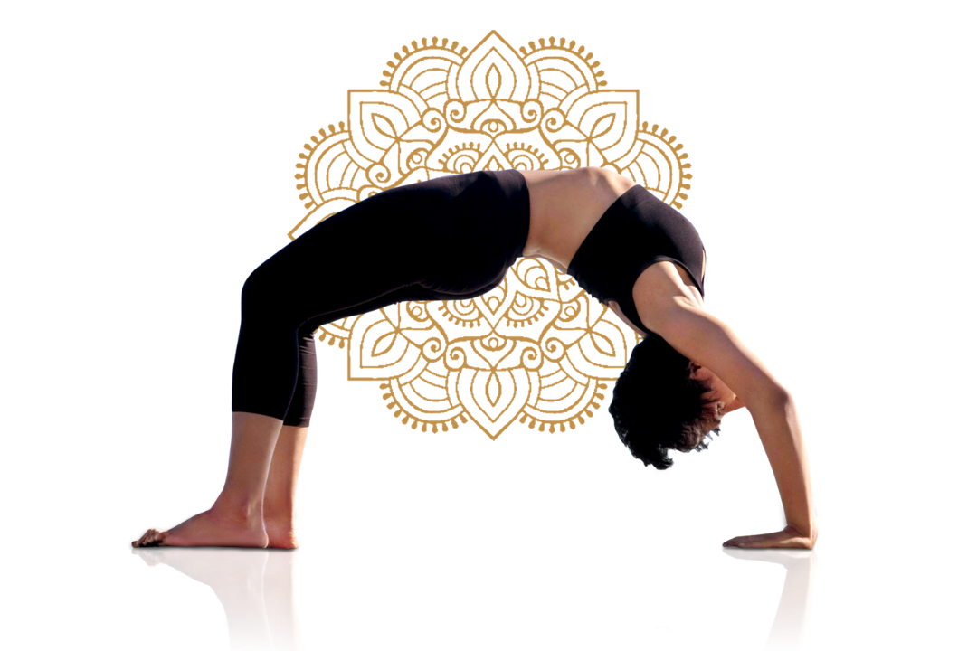 Yoga wheel pose